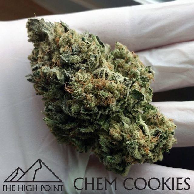 Theres nothing like chemcookies in the natural pnw sunlight hellip